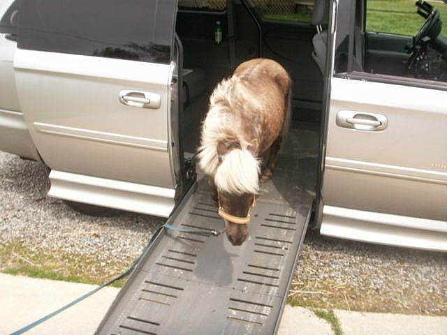 Sarah Dykema - a miniature horse that wandered into Jeff's minivan